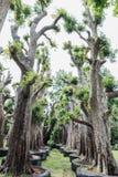 Grand arbre à vendre Images stock