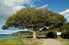 Grand arbre Photo stock