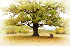 Grand arbre Photos stock
