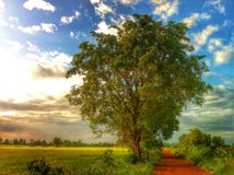 Grand arbre Image stock