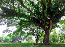 Grand arbre Photographie stock