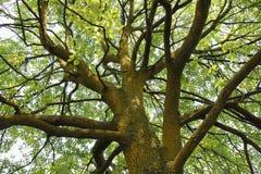 Grand arbre Photos libres de droits