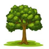 Grand arbre illustration stock