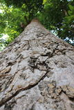 Grand arbre Photo stock