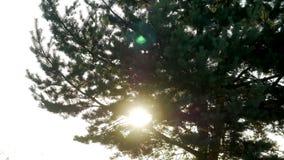 Grand arbre au coucher du soleil en silhouette se tenant sur le sable clips vidéos
