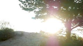 Grand arbre au coucher du soleil en silhouette se tenant sur le sable banque de vidéos