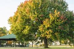 Grand arbre au fond de parc de Southaven photographie stock libre de droits