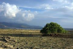 Grand arbre au milieu d'une plage Photo libre de droits