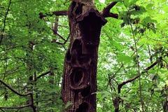 Grand arbre avec beaucoup de trous image stock