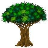 Grand arbre avec des veines Étapes des séries de rotation d'arbre illustration de vecteur