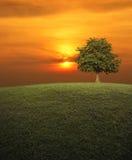 Grand arbre avec le champ d'herbe verte au-dessus du ciel de coucher du soleil, backgrou de nature Photo libre de droits