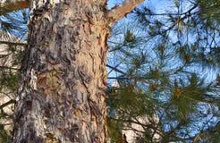 Grand arbre avec les feuilles vertes en parc au ressort photo libre de droits
