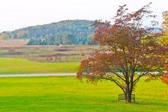 Grand arbre branchu d'automne et herbe verte sur un pré autour Images stock