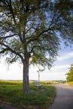 Grand arbre branchu et banc en bois près de la route Photographie stock libre de droits