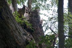 Grand arbre cassé photos stock