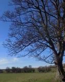 Grand arbre chez Crookham, le Northumberland, Angleterre LE R-U photographie stock libre de droits
