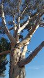 Grand arbre coloré Photo libre de droits
