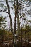 grand grand arbre d'isolement simple en nature images stock