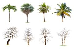 Grand arbre d'isolement sur le fond blanc, la collection d'arbres image stock
