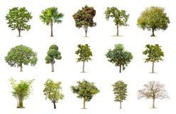 Grand arbre d'isolement sur le fond blanc, la collection d'arbres images stock