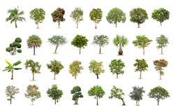Grand arbre d'isolement sur le fond blanc, la collection d'arbres photo libre de droits