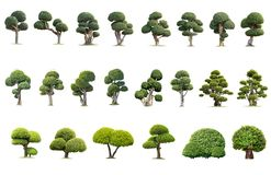 Grand arbre d'isolement sur le fond blanc, la collection d'arbres photo stock