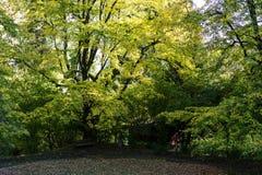 Grand arbre dans la vue de face de parc avec la lumière de jour photographie stock libre de droits
