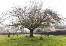 Grand arbre dans le cimetière ou le cimetière photo libre de droits