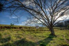 Grand arbre dans le domaine de campagne - lumière arrière grande-angulaire - HDR High Dynamic Range Photographie stock