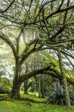 Grand arbre dans un jardin photographie stock libre de droits