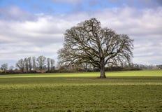 Grand arbre dans une campagne de l'Orégon de champ images stock