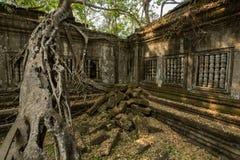 Grand arbre de Beng Mealea Images libres de droits