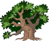 Grand arbre de chêne illustration stock