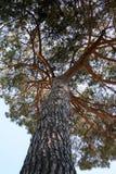 Grand arbre de dessous Photos libres de droits