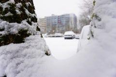 Grand arbre de neige sur le forground et bâtiment avec des voitures Images stock