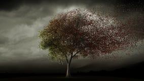 Grand arbre desserrant des feuilles en automne