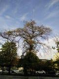 grand arbre en Thaïlande Photos libres de droits
