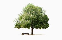 Grand arbre et banc d'isolement photos stock