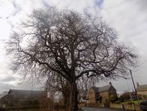 Grand arbre et nuages sombres, le Northumberland du nord, R-U photographie stock libre de droits