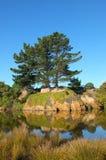 Grand arbre et végétation réfléchis sur la rivière Photo stock