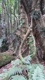 Grand arbre forrest Photographie stock libre de droits