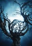 Grand arbre mystique de Halloween la nuit avec le brouillard Photographie stock libre de droits