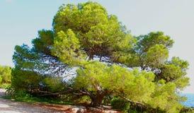 Grand arbre par la mer images stock