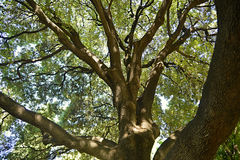 Grand arbre sous le soleil Photo libre de droits