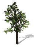 Grand arbre sur le fond blanc Photographie stock libre de droits