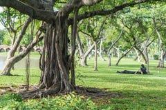 Grand arbre sur un champ vert Photo stock
