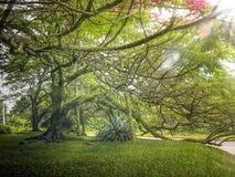 Grand arbre sur un paysage vert images stock