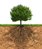 Grand arbre vert avec des racines dessous Images libres de droits