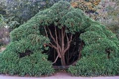 Grand arbre volumineux en parc photographie stock