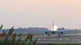 Grand atterrissage d'avion avec un premier plan d'herbe des pampas banque de vidéos